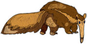 brown anteater
