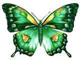 yellow and green butterfly
