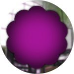 purple glass button with chrome frame