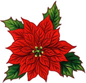 resolution 170x165 - Christmas Poinsettia