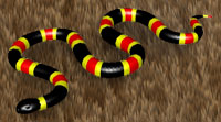 Coral Snake Background