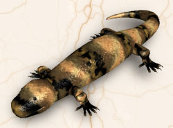 gila monster background