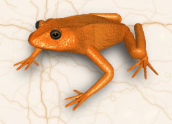 orange frog backgrounds