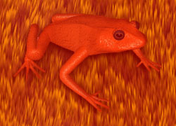 red frog background