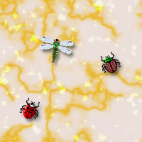 insects backgrounds