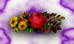 yellow and red flower background