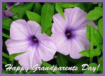 flowers happy grandparents day