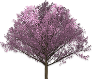 Free Tree Clipart Animated Tree Gifs Polish your personal project or design with these cartoon tree transparent png images, make it even more personalized and more attractive. free tree clipart animated tree gifs
