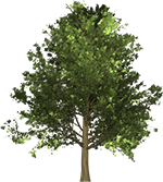 Free Tree Clipart Animated Tree Gifs All of these cartoon tree resources are for free download on pngtree. free clipart